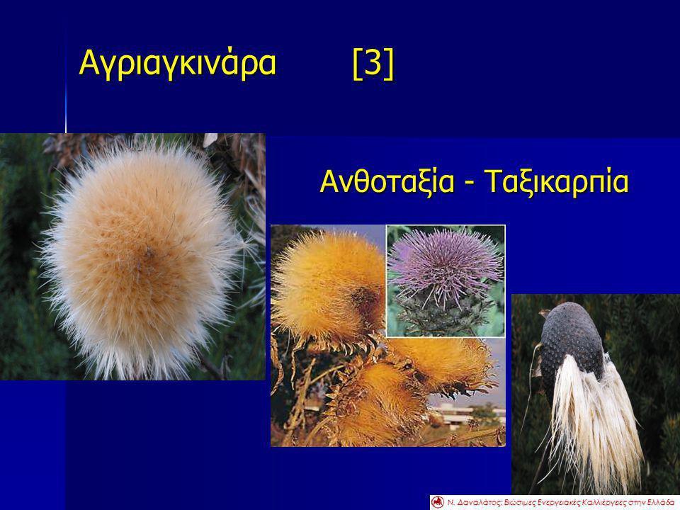Αγριαγκινάρα [3] Ανθοταξία - Ταξικαρπία